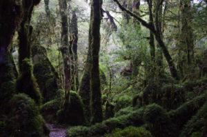 Andes organics Puyuhuapi